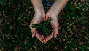 Kiertotalous: kasvin taimi kämmenissä