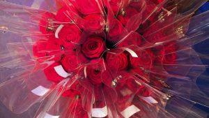 Kuvassa on punaisia ruusuja.