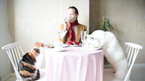 Kuvassa on pöydän äärellä ihminen sekä kaksi kissaa. Pöydälle on katettu laseja, kahvikupit ja leivoksia.