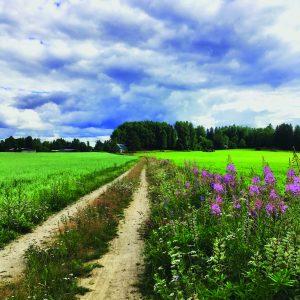 Kuvassa näkyy hiekkatie kesäisessä maisemassa, sinisellä taivaalla poutapilviä, ja ojan reunalla kukkii maitohorsma.