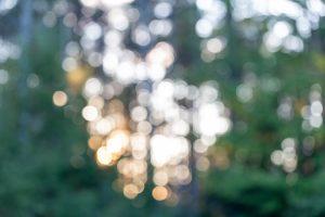 Valopalloja metsässä