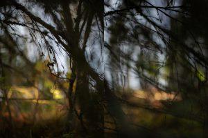 Kuvassa on epäselviä puun oksia.